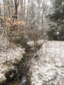 Blurry dusting, the Pisgah National Forest